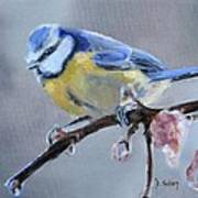 Blue Tit And Blossoms Poster