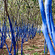 Blue Trees In Nature Poster