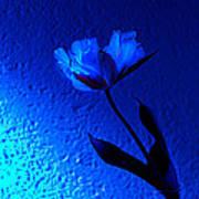 Blue Tulip Poster