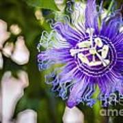 Blue Violet Poster