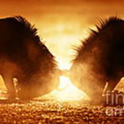 Blue Wildebeest Dual In Dust Poster
