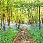 Bluebell Wood Watercolour Poster
