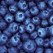Blueberry Harvest Poster by Greg Vaughn