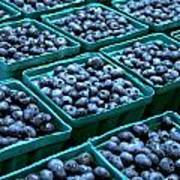 Blueberry Season In Maine Poster