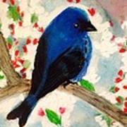 Bluebird Amid Apple Blossoms Poster
