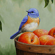 Bluebird And Peaches Greeting Card 3 Poster
