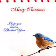 Bluebird Christmas Card Poster