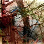 Bluebird Home Poster