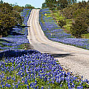 Bluebonnet Lined Hwy Poster by Thomas Pettengill