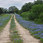 Bluebonnet Trail Poster