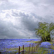 Bluebonnets And Spring Rain Poster