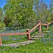 Bluebonnets And Stairs Poster