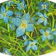 Bluets Of The Shenandoah  Poster