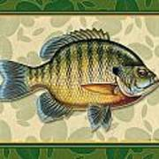 Blugill And Pads Poster