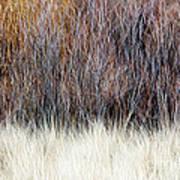 Blurred Brown Winter Woodland Background Poster