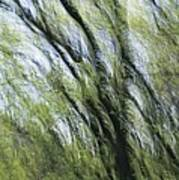 Blurred Trees Poster