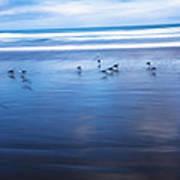 Blurry Bird Beach Poster