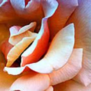 Blush Pink Palm Springs Poster
