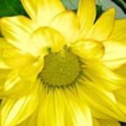 Blushing Sunshine Poster