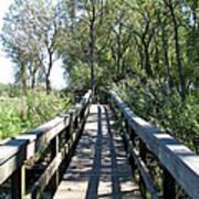 Boardwalk At Tifft Nature Preserve Buffalo New York Poster