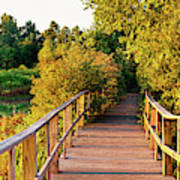 Boardwalk In A Forest, Magee Marsh Poster