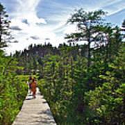 Boardwalk In Salmonier Nature Park-nl Poster