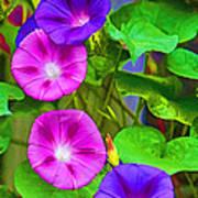 Bohemian Garden Morning Glory Poster