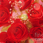 Bokeh Roses Poster by Cheryl Young