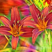 Bold And Beautiful Daylilies Poster
