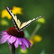 Bon Voyage Butterfly Poster