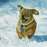Bongo In The Snow Poster
