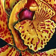 Bonnie Orchid II Poster by Daniel Jean-Baptiste