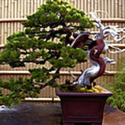 Bonsai Tree And Bamboo Fence Poster by Elaine Plesser