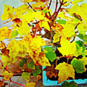 Bonsai Tree With Yellow Leaves Poster