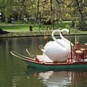 Boston Swan Boats Poster