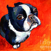 Boston Terrier Dog Painting Prints Poster