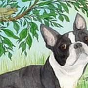 Boston Terrier Dog Tree Frog Cathy Peek Art Poster