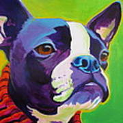 Boston Terrier - Ridley Poster by Alicia VanNoy Call