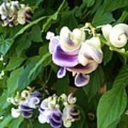Botanic Garden Flower Poster