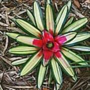 Botanical Flower Poster