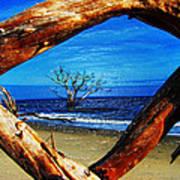 Charleston Sc Botany Bay Poster