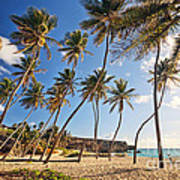 Bottom Bay Beach In Barbados Caribbean Poster
