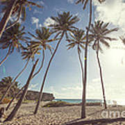 Bottom Bay Tropical Beach In Barbados Caribbean Poster