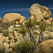 Boulders In The Joshua Tree National Park Poster
