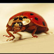 Bowing Ladybug . Art And Frame Print Only Poster