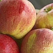 Bowl Of Royal Gala Apples Poster