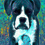 Boxer 20130126v4 Poster by Wingsdomain Art and Photography