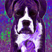 Boxer 20130126v6 Poster by Wingsdomain Art and Photography