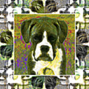 Boxer Dog 20130126 Poster by Wingsdomain Art and Photography