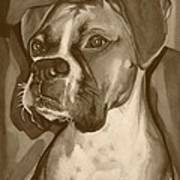 Boxer Dog Sepia Print Poster by Robyn Saunders
